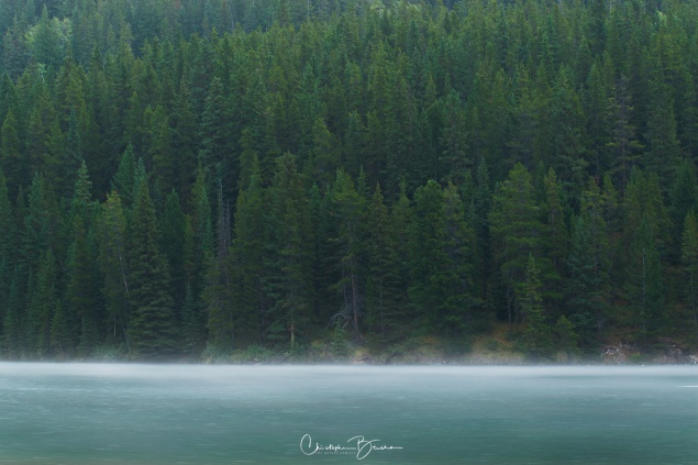 The pine forest is so dense. In the foreground, fog moved at speed at the waters surface.