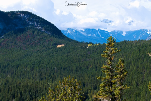 In this part of the world, Pine Forests can extend as far as the eye can see. This is wild habitat, perfect for bears.