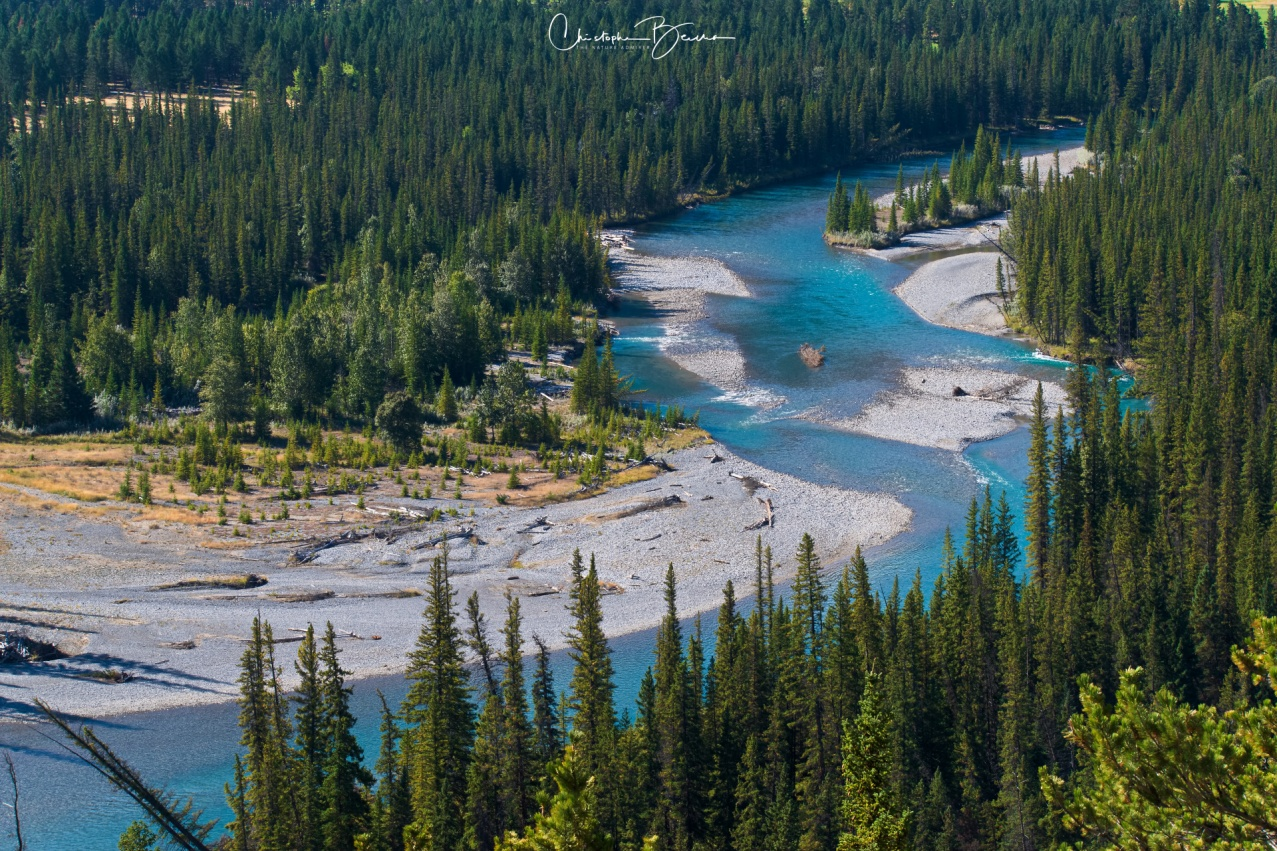 From this viewpoint, Bow River takes on its majestic turquoise color. The color is produced due to sedimentation coming from melting glaciers.
