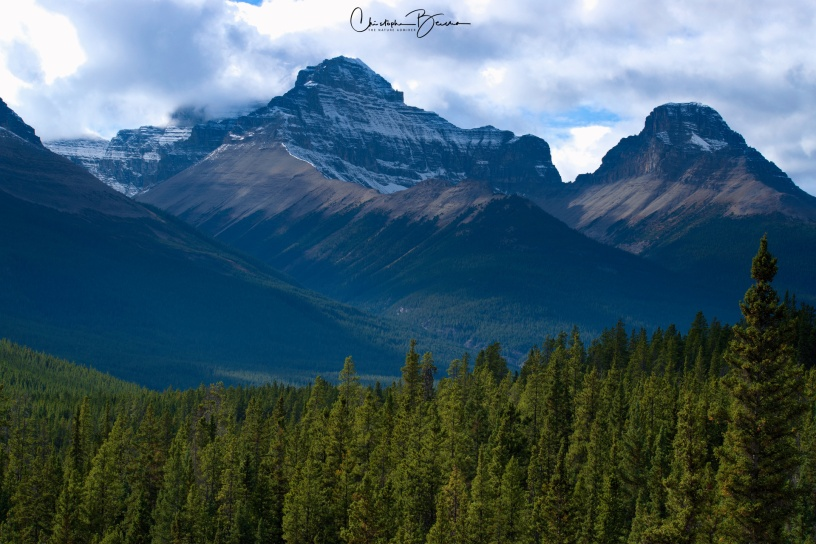 More rocky mountains, along with a large expanse of pine forest.
